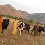 Bellota Agrisolutions donates 155 cows for to provide resources in India.